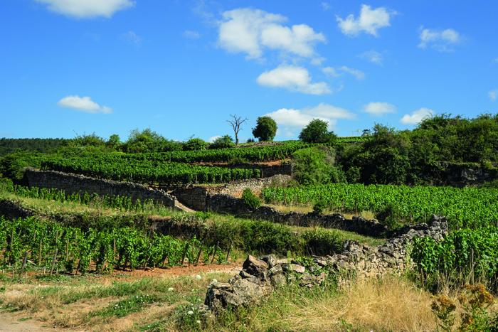 Bourgogne-Wijnpakket