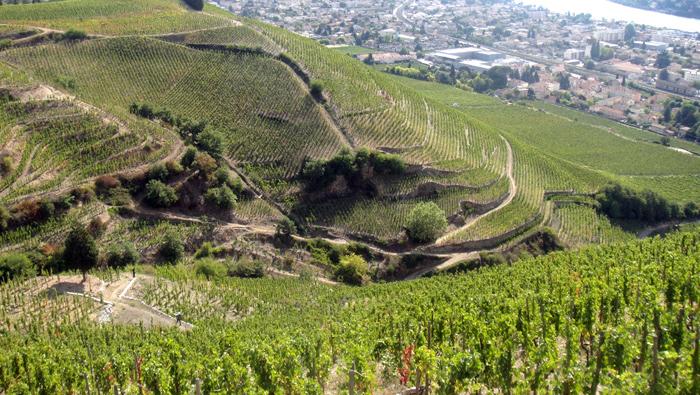 Wijnpakket-Cotes-du-Rhone4